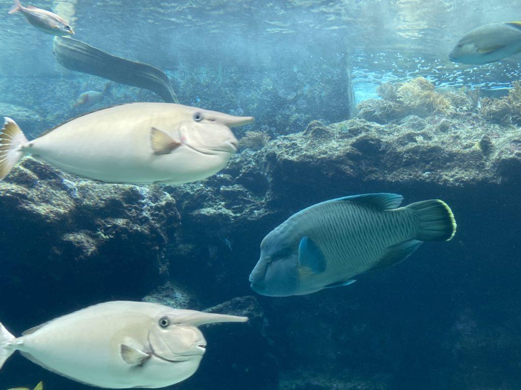 美ら海水族館、コロナ対策し一部再開してました~