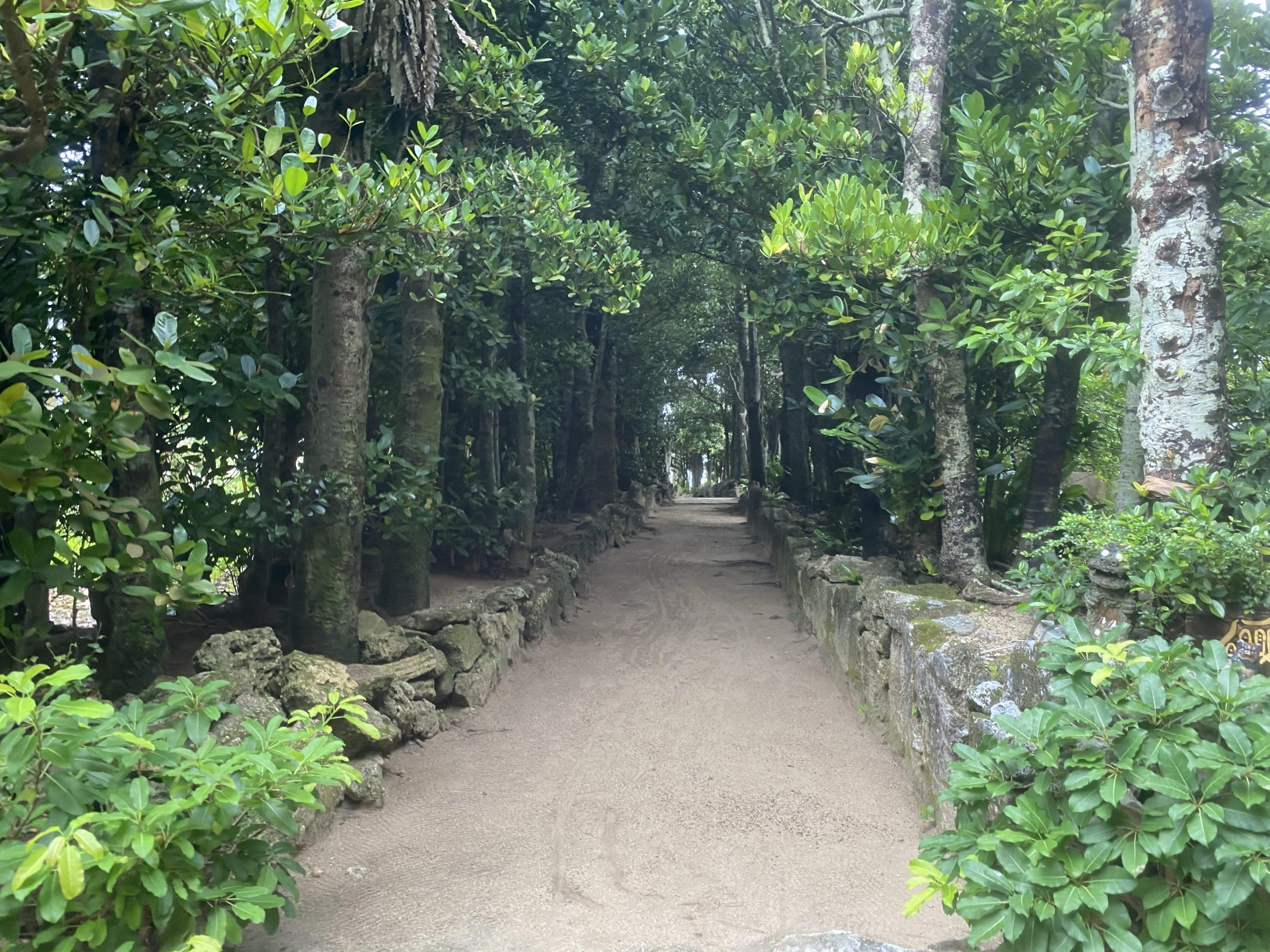 沖縄の備瀬にある【フクギ並木】観光スポット写真をいっぱい撮ってきました。